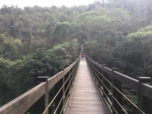 忘憂森林、銀杏森林、小半天、信義賞梅