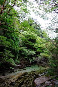 屋久島漫步