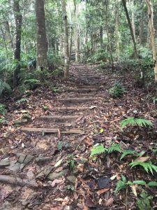 橫嶺自然森林