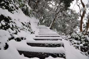 東眼山國家森林遊樂區 賞雪趣