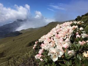 奇萊北峰2016.05.18