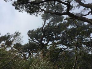 滿山滿谷的木蓮、山櫻花(樟樹湖古道)