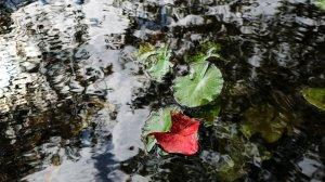 山光水色~蘭陽落羽松尋奇