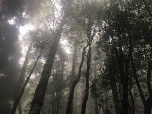 觀霧檜山巨木森林步道