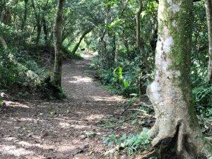 有咖啡香的太和山走坪溪古道