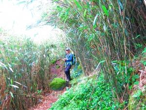 在郊山遇見百岳箭竹草原稜線~小觀音山群峰