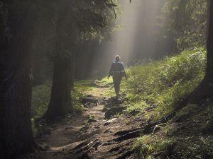 【山林與環境】你所不知道的巡山員(上)-工作內容及福利