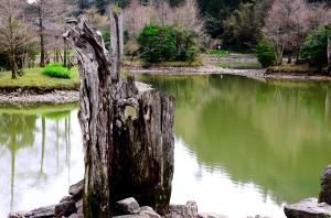 巨木的大山....巴博庫魯山