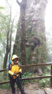 北得拉曼之木