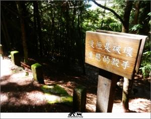 台中武陵桃山瀑布(桃山步道)