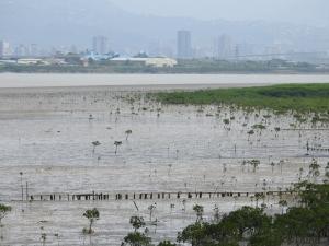 淡水河濱生態