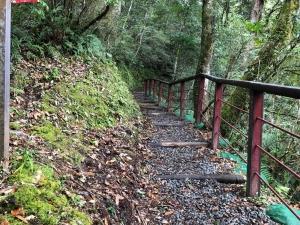【走在台灣的脊樑上】豐腴美麗的地方 拉拉山森林步道