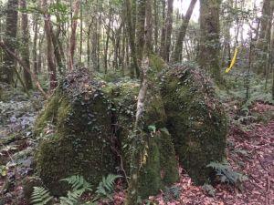 內鳥嘴山(北德拉曼神木步道)