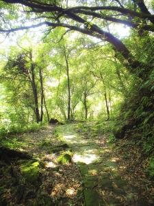 步道小旅行-絲娟瀑布步道