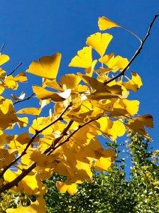 秋天的武陵農場