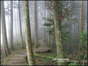 杉林溪青龍蕨類步道