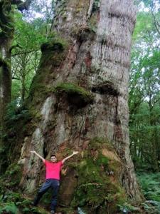 【春夏之際】巨木之美