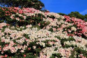 艷麗的季節---主峰-東峰-石門