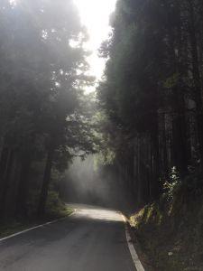 觀霧~雲霧步道