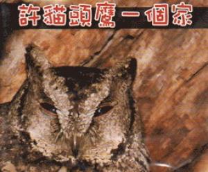 【DVD】許貓頭鷹一個家