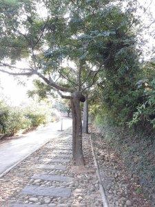 南寮竹坑步道