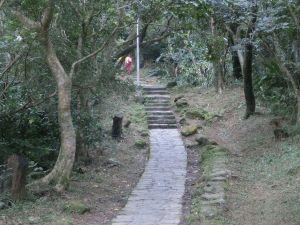 飛龍步道.樟湖步道.樟樹步道