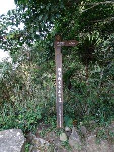 台南最高峰-小百岳大凍山-清肺步道