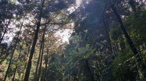 溪頭森林浴步道 2017 09 11