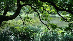 限定美景~~滿滿水的向天池!
