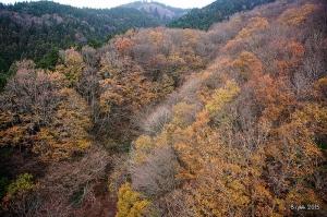 【日本】2015 冬.奈良、大阪山行 - 大阪府第一.金剛山
