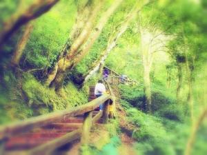 瀑布和森林的對話