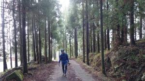 【新竹/五峰】戀戀柳杉林,比大鳥連稜縱走