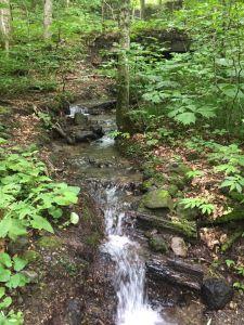 180725 日本奧入瀨溪森林步道