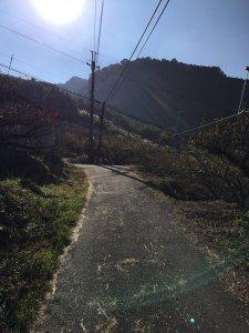 台灣小百岳#037-馬那邦山