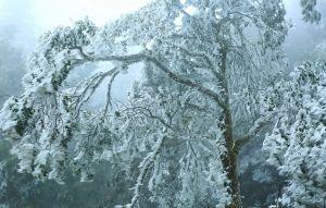 絕美霧淞---極凍太平山