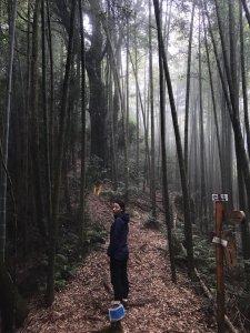 181022金柑樹山、忘憂森林步道