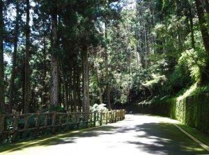 【新聞】藤枝國家森林遊樂區試營運至6月30日止。7月1日起暫不提供服務