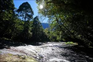 【嘉義】阿里山,石夢谷、情人谷瀑布步道