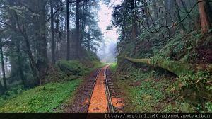阿里山『水山巨木林道』行腳