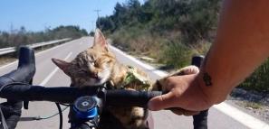 電焊工辭職騎行歐洲 收留天才流浪貓坐肩頭同遊