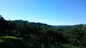 后里鳳凰山+觀音山步道