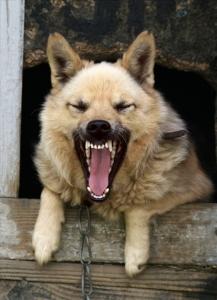 【登山醫學】狂犬病Q&A