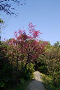 福州山步道