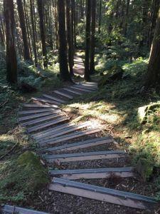 東眼山定向運動及自導步道
