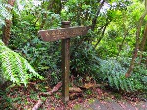 台北小溪頭環狀步道、翠山步道、大崙尾山