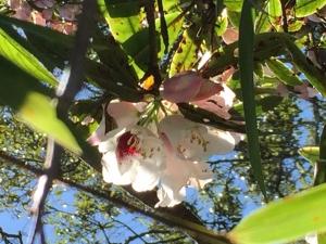 【春夏之際】加里山