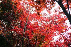 【宜蘭】20120428 太平山