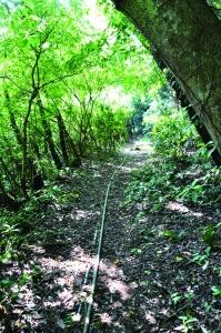 【書摘】《大台北自然步道100(2)》-猴崁水圳步道