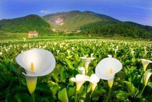 【活動】「2019竹子湖生態之旅」活動即將於108年3月13、16、23日登場!