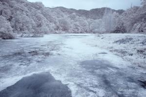 福山植物園-紅外線攝影